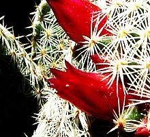 cactus by kateN