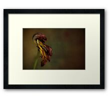 Faded Beauty of the Flower Framed Print