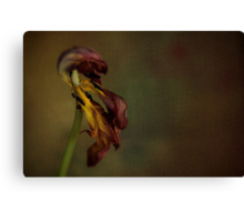 Faded Beauty of the Flower Canvas Print
