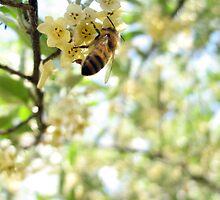 Honey and Olives by Karissa Schulten