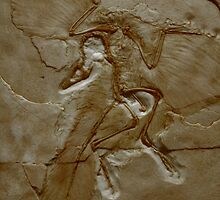 Prehistoric Angel by transmute