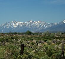 Sierra Mountains, Nevada by Cheri Perry