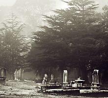 The Fog by Craig Hender