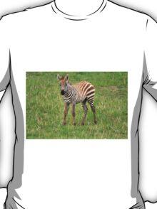 Zebra Foal  T-Shirt
