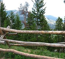 Rocky Mountain Fence by fortuitous