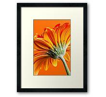 Gerbera 10 Framed Print