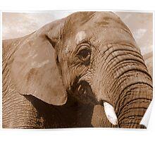 Elephant ~ Poster