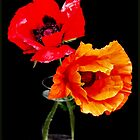 Poppy Pair by lisa1970