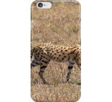 Serval Cat  iPhone Case/Skin