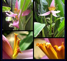 Banana Flowers in Thailand by Keith Richardson
