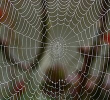 The Spider's Web by Leeo