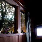 Sleeping with the Television On by Alexander Greenwood