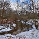 Winter In The Garden State by Lanis Rossi