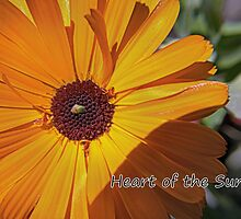 Heart of the Sun by Bill Lighterness