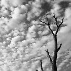 Drought Striken by ein22