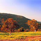 Swan Valley - Western Australia  by EOS20