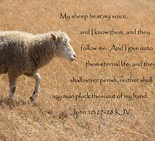 My Sheep Hear My Voice... by Sue Ellen Thompson