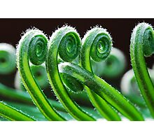 Dancing Fronds Photographic Print