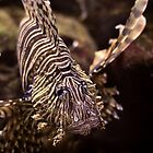 lion fish by A.R. Williams
