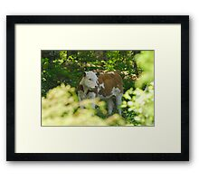 Just Because I'm NOT a Fawn... :) Framed Print