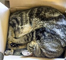 No Box Too Small by Mikell Herrick