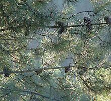 Pine matrix by moix