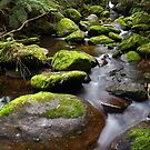 Mossy Rocks by Lindsay Knowles