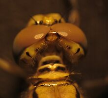 Back View Of A Dragon Fly's Head by Toni Kane
