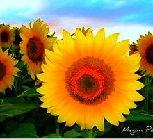 Sunflowers by Megumi Powell