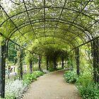 Hyde park  by Kimberley  x ♥ Davitt