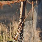 A rusty fence by Ellimac