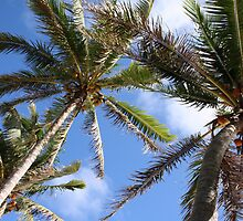 Coconut Palms of Rarotonga,Cook Islands by spuleosi