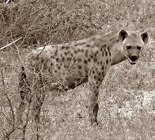 The Safari Series - 'Hyaena' by Paige