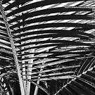 palm leaf patterns by jenny meehan