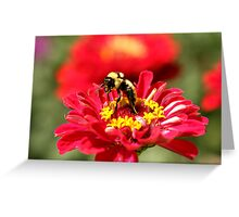 Bumble Bee Gathering Nectar Greeting Card