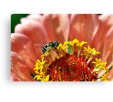 Tiny Bee on a Flower Canvas Print