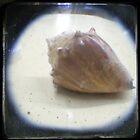 seashell by Mayware