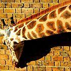 Giraffe against London Brick  by Barnbk02
