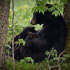 Cades Cove Bear III by photodug