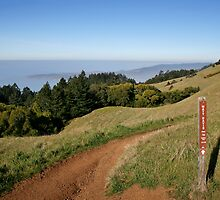 Mount Tamalpais: Matt Davis Trail by Stuart Zero