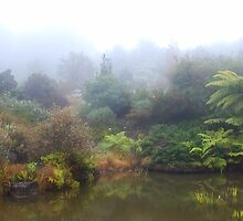 Lake, Mt Tomah Botannical Gardens, Blue Mountains by Catherine Davis