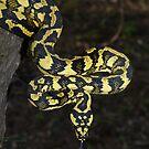 Reptile  by Steve Bullock