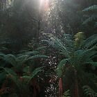 Rainforest Reflection by Tony Waite-Pullan