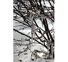 winter fresh Photographic Print