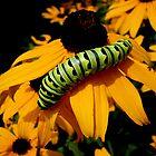 Another Caterpillar Shot by Kyle Hudak