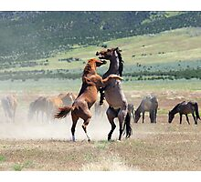 Wild Struggle Photographic Print