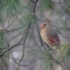Beautiful Bird by vigor