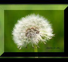 FLUFFBALL by Madeline M  Allen