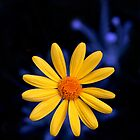Electric Daisy by Cathy Middleton