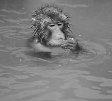 Snow Monkey by Shannon Benson